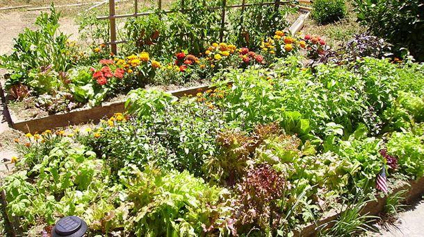 Biodiversidad en las huertas la importancia de las for Importancia de las plantas ornamentales