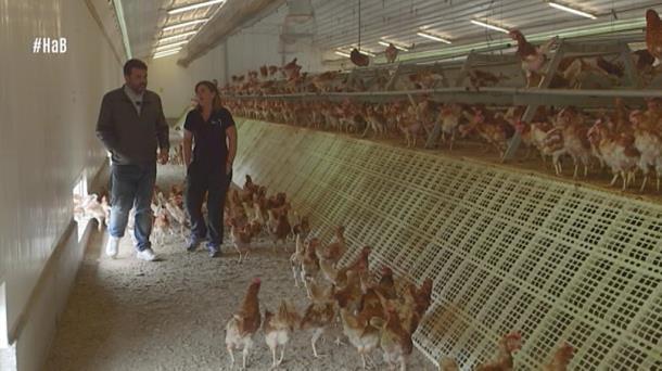 Vídeo Ander Visita Una Granja De Gallinas Ecológicas En Orduña