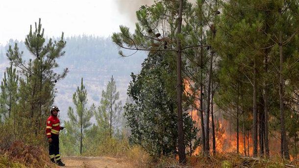 Portugal lucha contra el incendio más complicado del verano. Foto: EFE