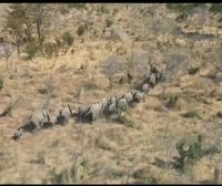 284 elefantes muertos en Botswana