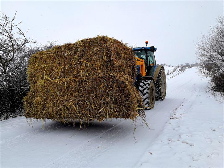 Foto de Filomena: Nieve en los pueblos y ciudades de Navarra y Euskadi: Tudela, Tafalla, Ablitas, Fitero    Sociedad